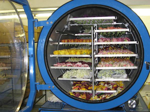 Sấy thăng hoa giúp sấy thực phẩm, hoa quả tốt hơn, giữ nguyên màu sắc và hình dạng